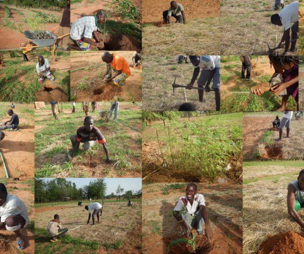bf1_installation_of_synecoculture_farm_in_burkina_faso_1