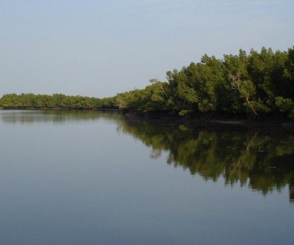 mangroves_rio_Cacheu_photo_P.Campredon